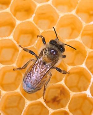 Got Seasonal Allergies?  Eat the Local Honey