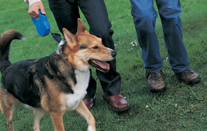 Get Physical: Walk Dogs at a Local Animal Shelter