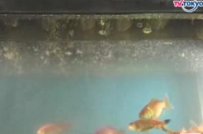 Goldfish Tank + Deep Fryer = Only In Japan