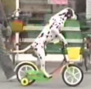 This Is Doggone Odd!