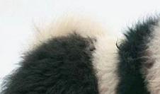 Fuzzy Wuzzy Was A Pandog!