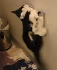 Kitty Vs. Toilet Paper