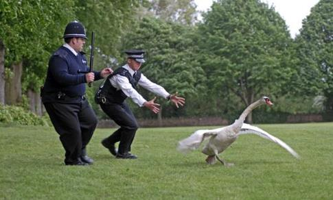 Movie Preview: Hot Fuzz