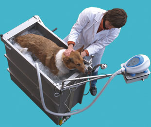SanWhirl Dog Jacuzzi: Spoiled Sweet or Spoiled Rotten?