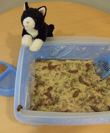Bake Up Kitty Litter (Cake)