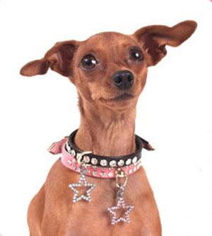 Trend Setters: Preppy Pets Rock... Charms