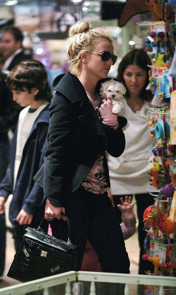 Found! Britney's New Carrier (and Dog?)