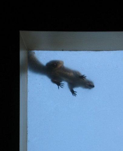 Squirrel Torment