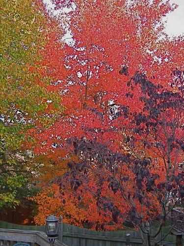 Good-bye fall, Hello winter!