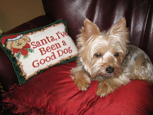 Frankie is Waiting for Santa!
