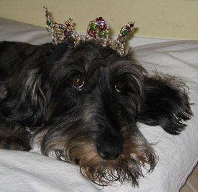 "Top 10 Pet Names for ""Pet Owner"""