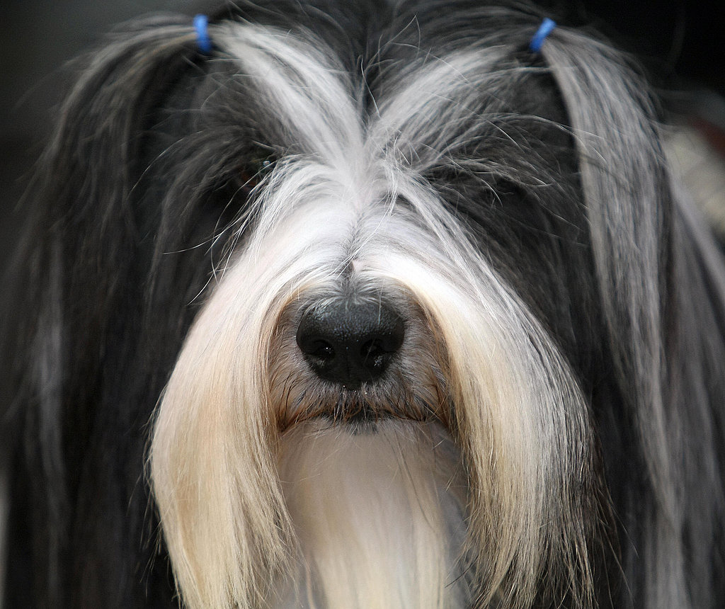 dog hair style the sweetheart styles 15 artfully groomed pup 1534 | Sweetheart