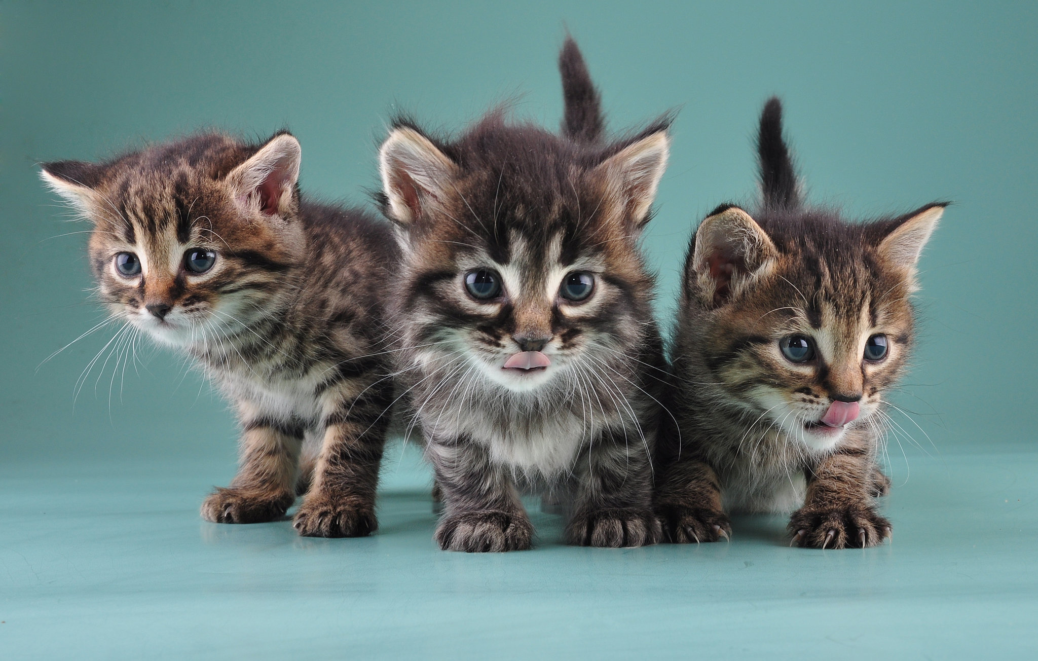 metronidazole 50 mg for cats