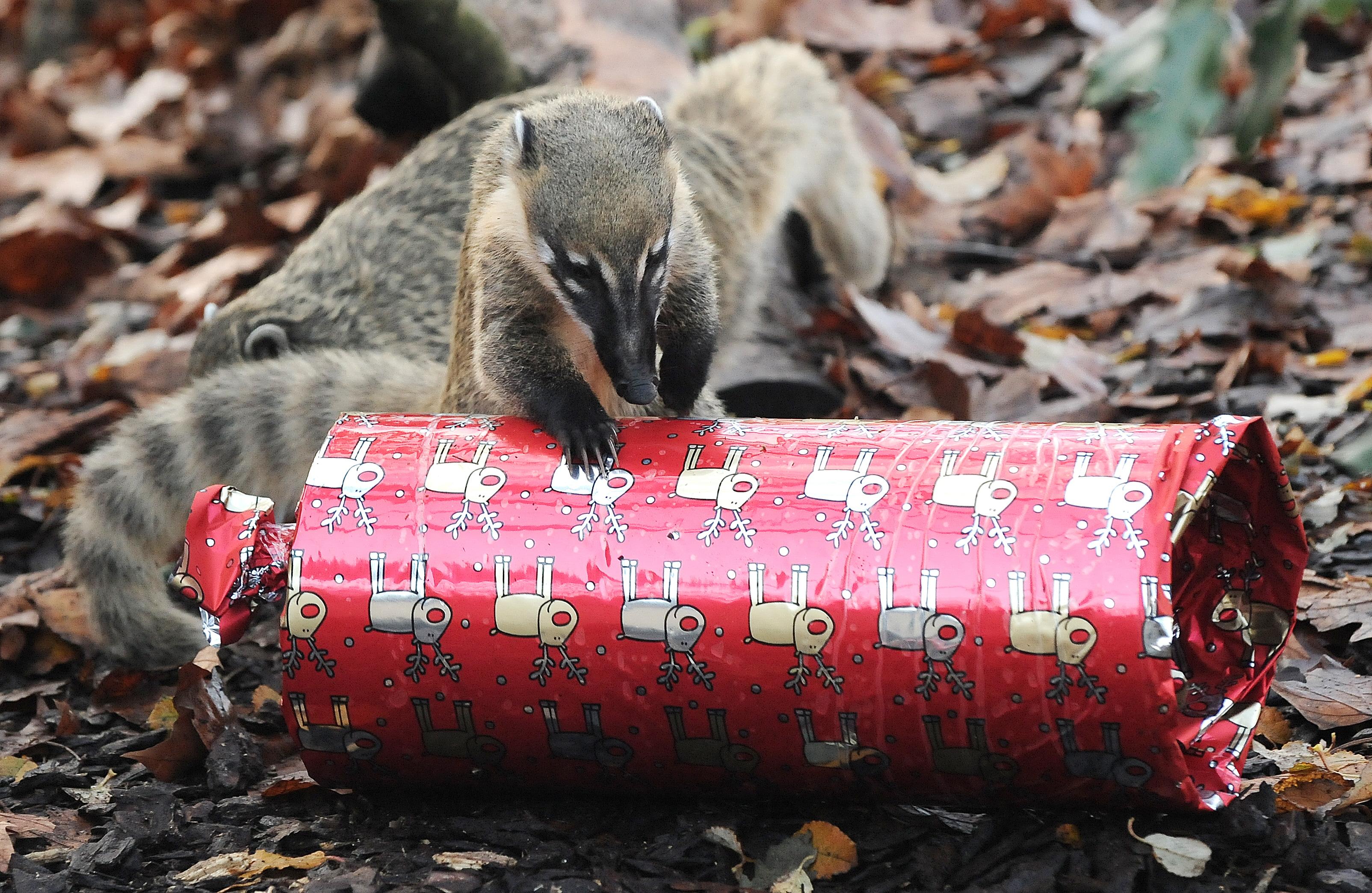 london zoo christmas video