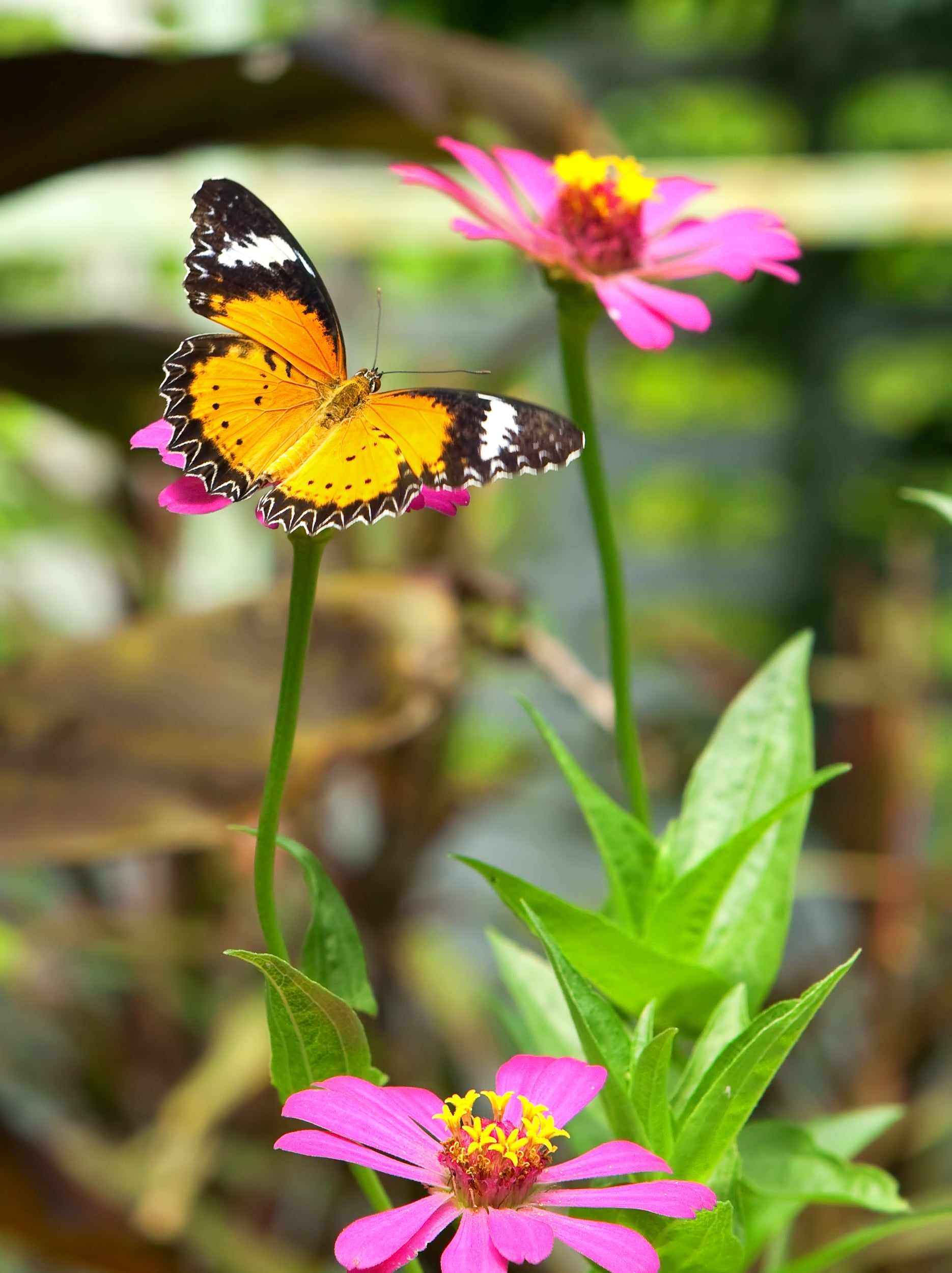PopsugarLivingSpringHow to Attract Butterflies to Your GardenMay 19, 2017 by Maggie Winterfeldt217 SharesChat with us on Facebook Messenger. Learn what's trending across POPSUGAR.A butterfly garden is one that provides these majestic creatures with everything they need — food, water, sun — in a sheltered and hospitable environment. With a bit of thought and a few changes, you can turn your backyard into a gorgeous garden and natural butterfly habitat. Here's how.Love what you're reading? Head over to our Snapchat for more awesome, bite-sized content!Plant Ample Nectar SourcesButterflies' main objective is to find nectar, their food, so you can attract them by filling your garden with flowers rich in it. Nectar-rich flowers include aster, butterfly bush, goldenrod, lavender, lilac, milkweed, mint, sage, snapdragon, zinnia, and others. Butterflies will be most encouraged to take up residence in your garden if you space your plantings out for continuous bloom, so one plant starts blooming when another stops, - 웹