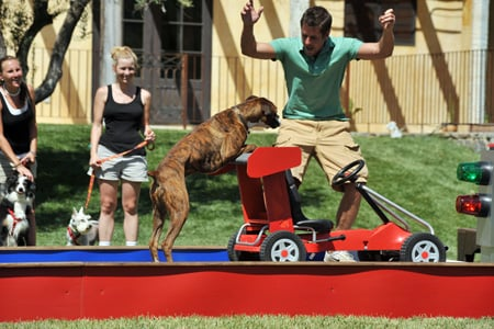 Presley and Travis Won Greatest American Dog