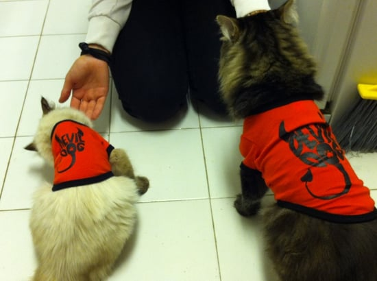 Mishka (right) and Gorbie (left).