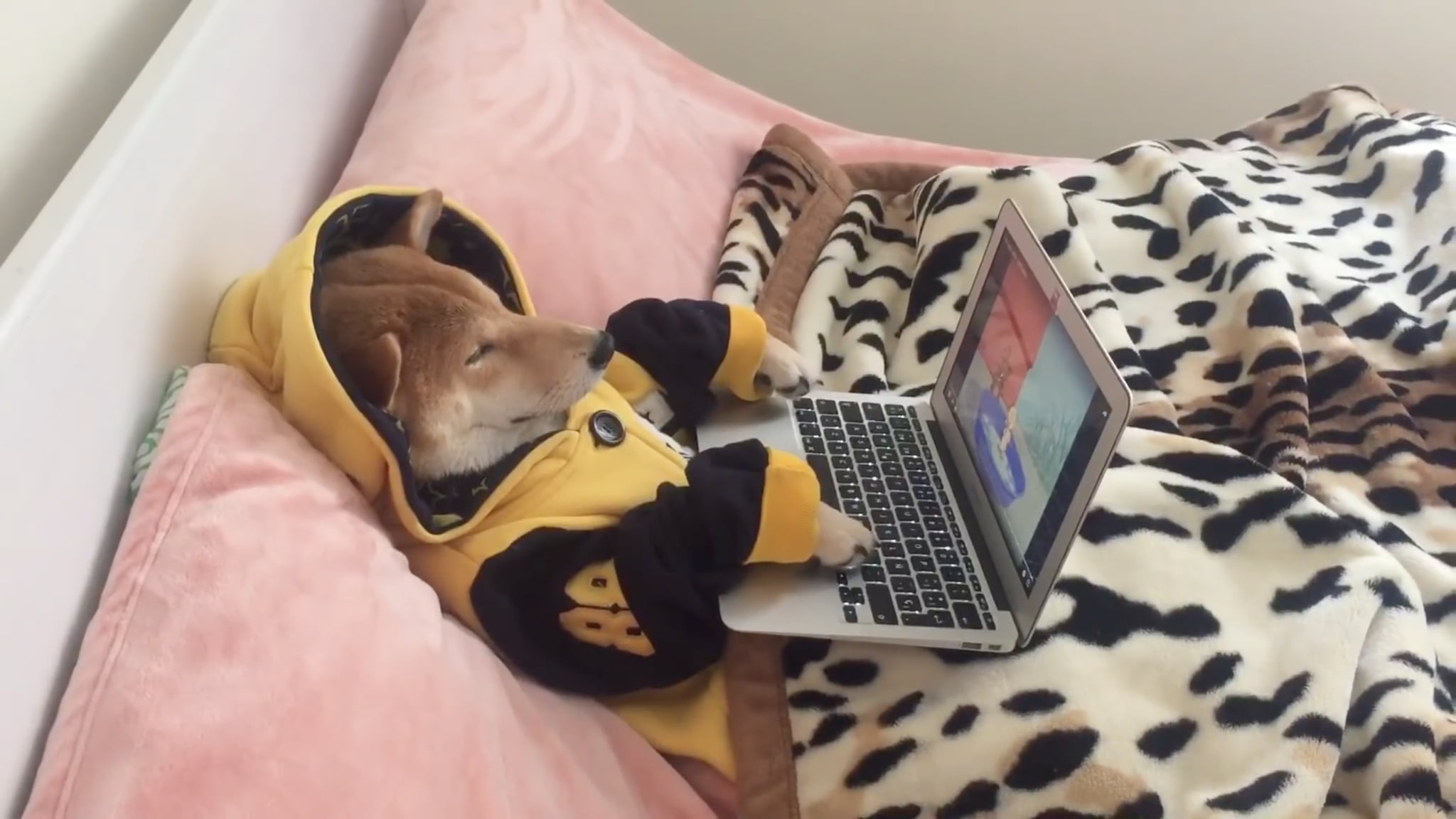 how to stop a dog who is addicted to screens