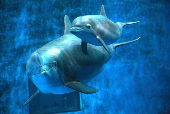 Baby Dolphin Named on Facebook