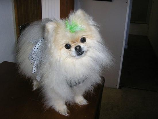Cutie toot Girl!