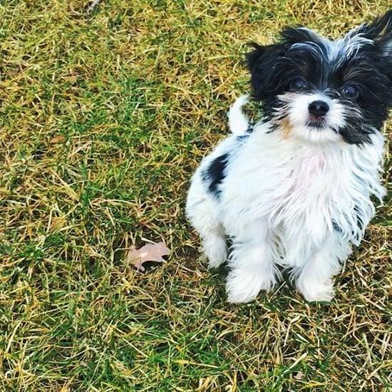 Tom Brady and Gisele Bundchen Adopt New Dog Fluffy