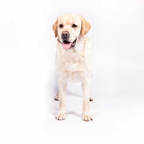 Top Dog Breeds of 2013