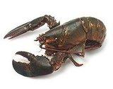 Expert Recipe For Lobster Rolls